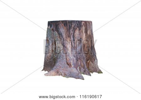 Stump Isolated On White Background.