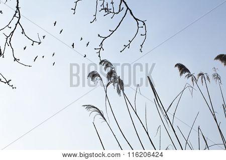 Flying Black Birds
