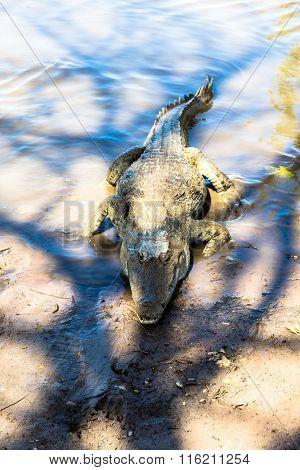 Sacred Crocodile, Burkina Faso