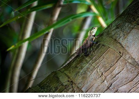 Small lizard on a palm tree