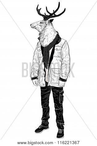 Portrait Of A Deer