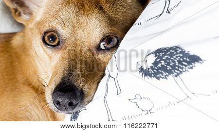 Dog sleeping on white pillow