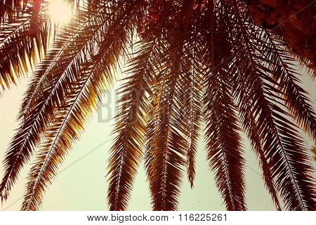 palm, palm tree isolated