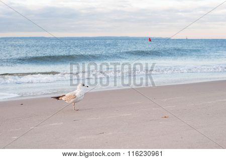 Gull on the ocean beach