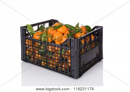 Fresh Ripe Mandarines In Crate.