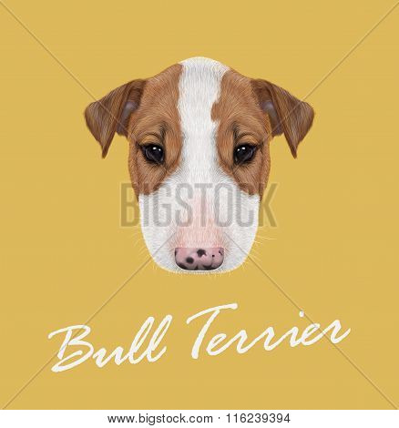 Bull Terrier Dog Portrait.