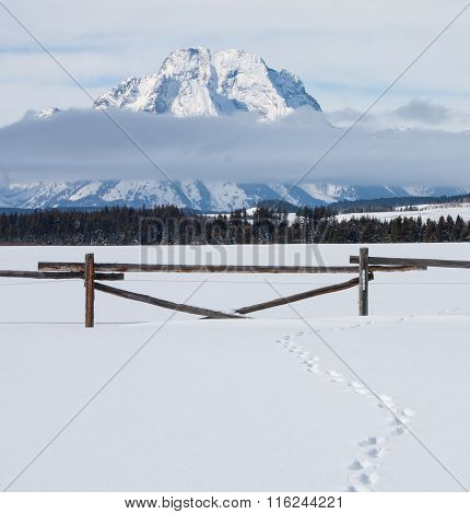 Teton Mountains With Fence And Tracks In Snow