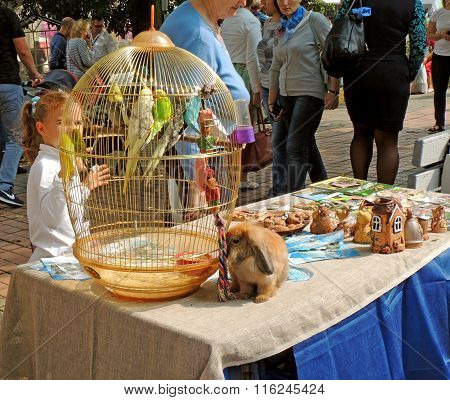 Near Cage With Budgerigars