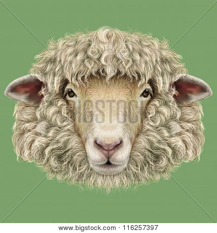 Farm Sheep Portrait.