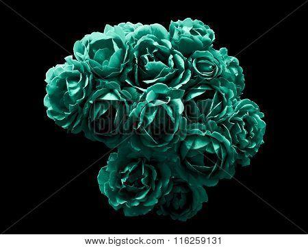 Surreal Dark Chrome Bush Of Turquoise Rose Flowers Macro Isolated On Black