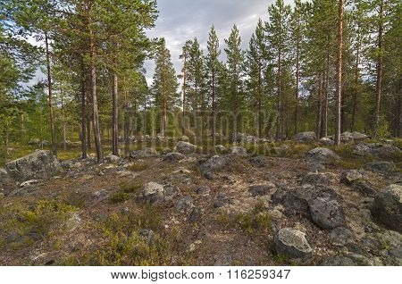 Northern Forest. Glade With Boulders.