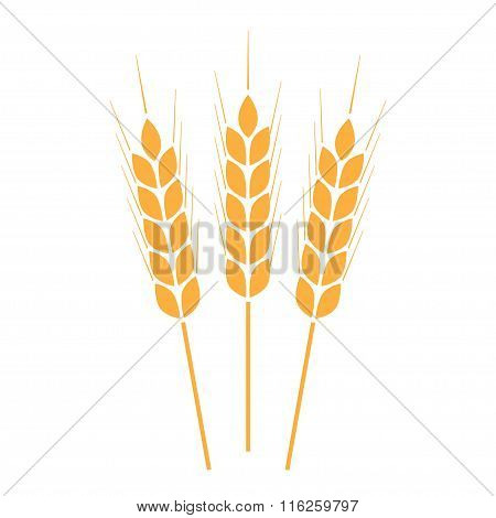 Wheat ears or rice icon. Crop symbol on white background. Vector illustration.