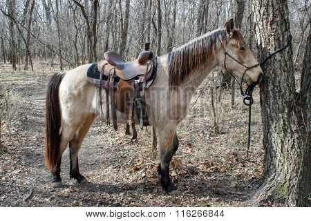 Horse Ready To Ride