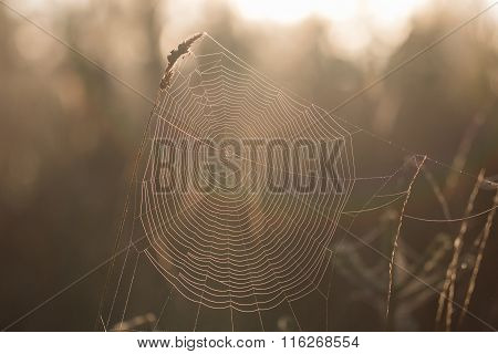 Detail On A Cobweb Early Morning In Autumn