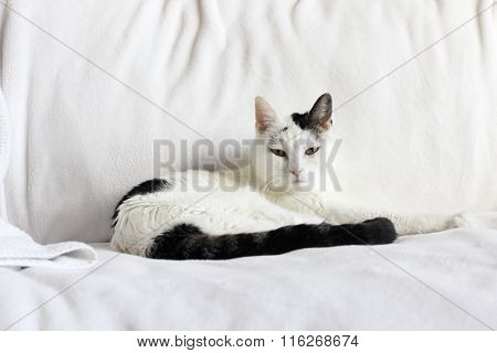 White And Black Cat Relaxing