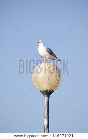 A seagull perched a lamp set against a bright blue sky
