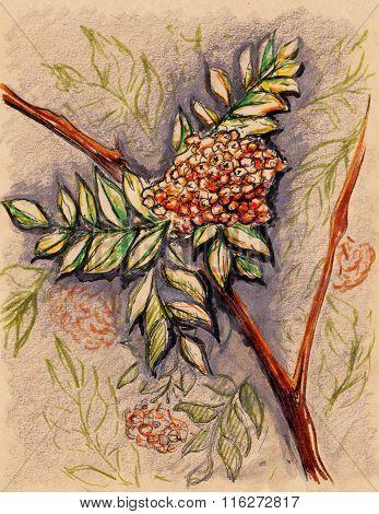 Rowan Berry Leaf Branch Vintage Craft Sketch