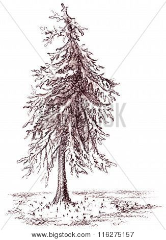 Brown Banked Monochrome Tree Sepia Sketch Isolated