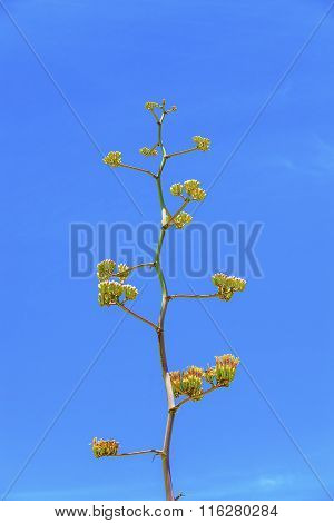 Blooming Yellow Desert Flower In Detail In The Desert With Blue Sky