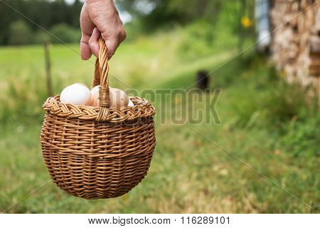 Hand Is Holding A Basket Full Of Eggs