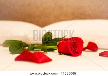 Single rose on the bed