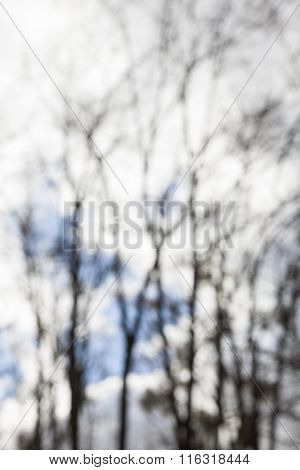 Blurred Silhouettes Of The Bare Trees