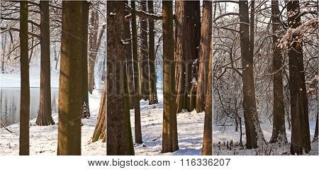 Snow-covered tree trunks and branches. Beautiful winter landscape with snow and lake