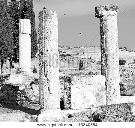 And The Roman Temple History Pamukkale    Bird