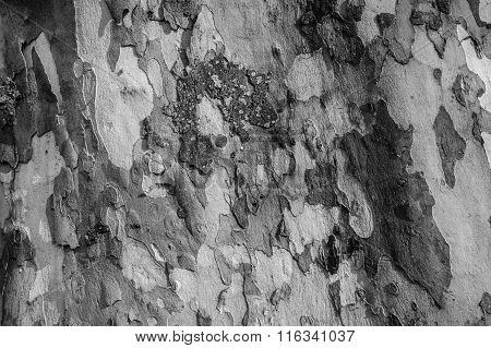Wooden Interesting Texture - A Bark Of An Old Tree. Black And White Horizontal Wooden Texture Bark A