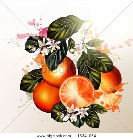 Vector Set Of Realistic  Oranges With Flowers For Design