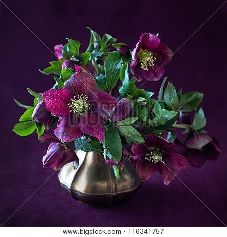 bouquet of ? purple flowers