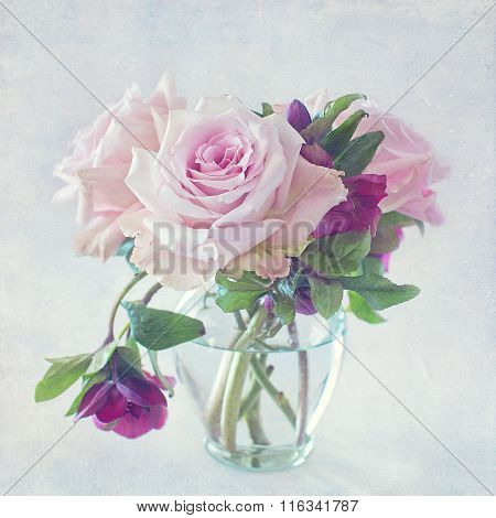 beautiful pink rose flowers
