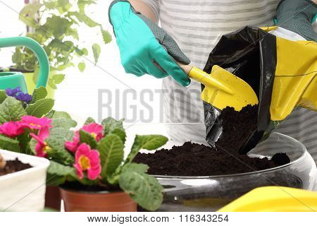 Planting potted flowers.