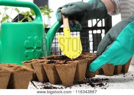 Sowing the seeds into pots. Home cultivation