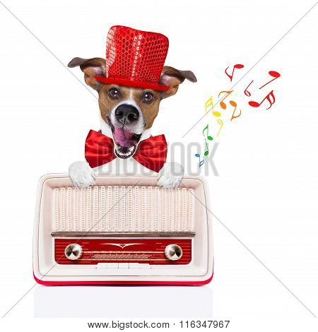 Dog Listening Radio Music