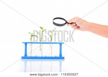 Magnify Glass In Child Hand Over Plant Seedling