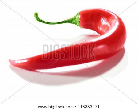 Fresh Red Hot Chili Pepper.