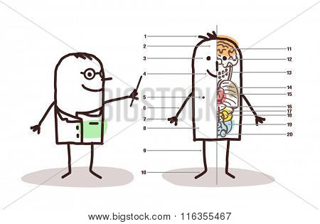 vector cartoon male anatomy lesson