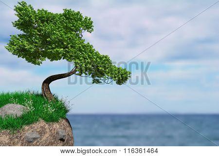 Border Tree