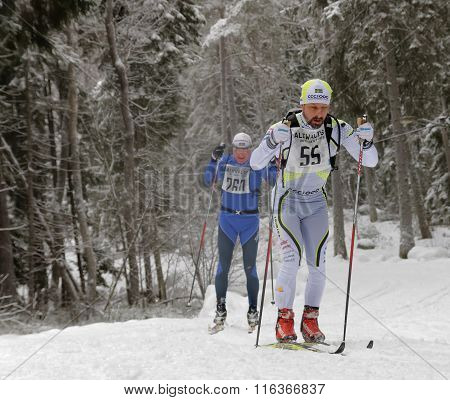 STOCKHOLM - JAN 24 2016: Two cross country skiing men in the beautiful spruce forest at the Stockholm Ski Marathon event January 24 2016 in Stockholm Sweden