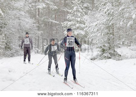 STOCKHOLM - JAN 24 2016: Group of cross country skiing woman in the beautiful pine forest at the Stockholm Ski Marathon event January 24 2016 in Stockholm Sweden