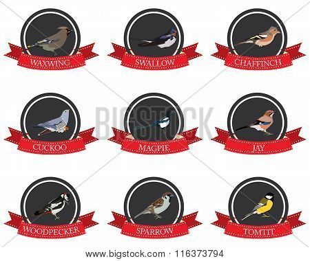 Flat Icon Birds With Names