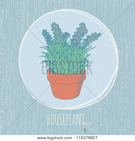 vintage house plant