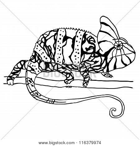 Hand drawn chameleon