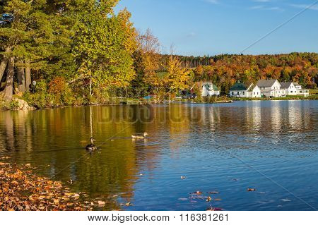 Autumn Foliage In Elmore State Park In Vermont
