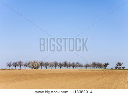Freshly Ploughed Acre With Row Of Trees