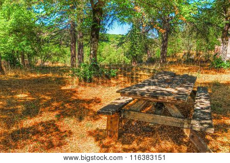 Picnic Table In Burgos Forest