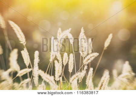 Sunny Rural Meadow