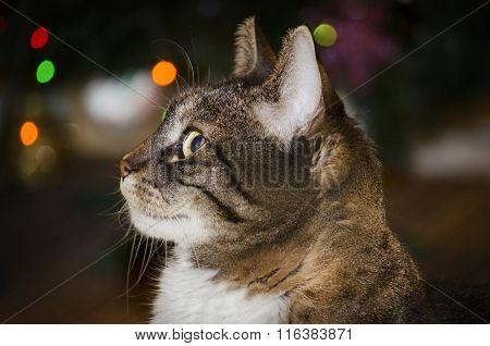 Home Cat Portrait