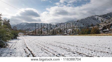 Winter Landscape, Cyprus